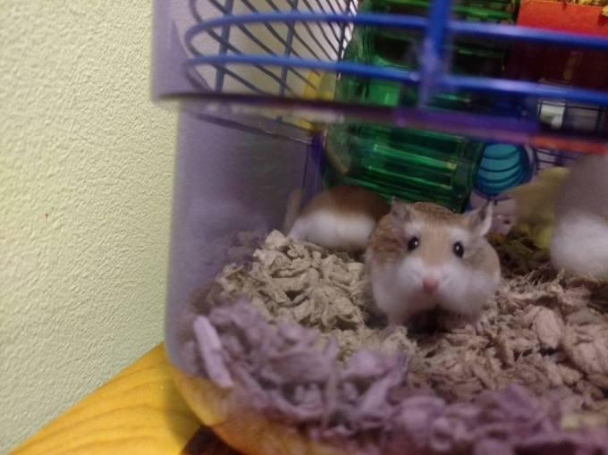 hamsters